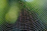 Spider web detail