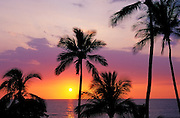 Sunset through palm trees at Hapuna Beach, Kohala Coast, The Big Island, Hawaii