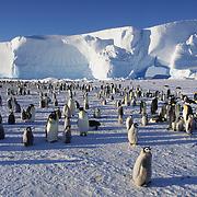 Emperor Penguin rookery at Atka Bay, Antarctica.