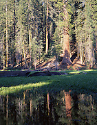 Giant Forest, Meadow, Sequoia Trees, Sequoia Tree, Sequoia, Sequoia Grove, Sequoia and Kings Canyon National Park, California