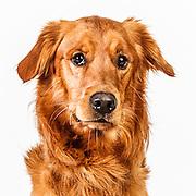 20140423 Dogs for Glen