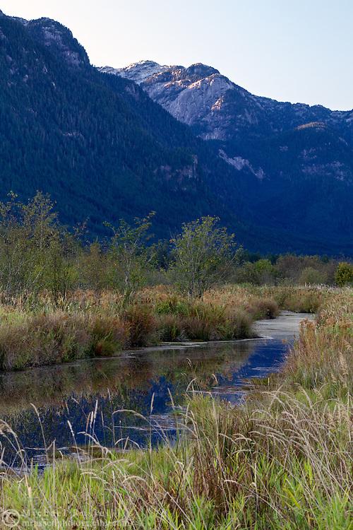 Widgeon Peak rises above water at the Pitt Polder Ecological Reserve's Pitt Marsh in Pitt Meadows, British Columbia, Canada