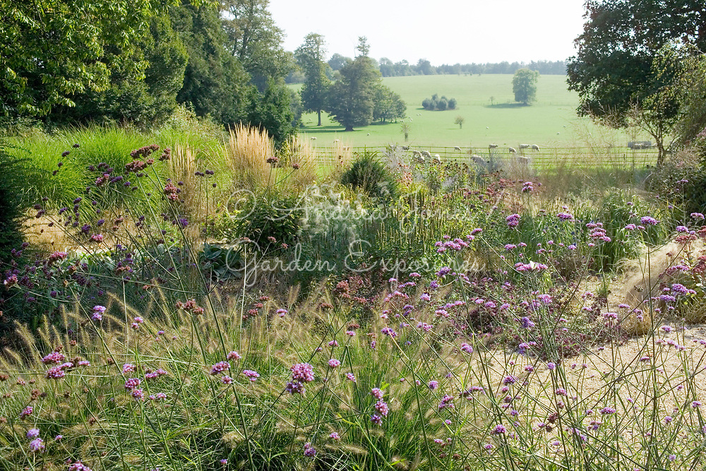 Drought tolerant herbaceous perennial planting in the Wild Garden including Verbena bonariensis and ornamental grasses at West Dean Gardens, West Sussex, England