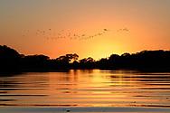 Sonnenaufgang über einer Flusslandschaft im Pantanal mit fliegenden Vögeln, Brasilien<br /> <br /> Sunrise over a river landscape in the Pantanal with flying birds, Brazil