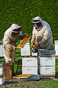 Bees and Honey Production in New Zealand