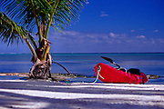 Beached sea kayak under a palm tree, San Pedro, Ambergris Caye, Belize