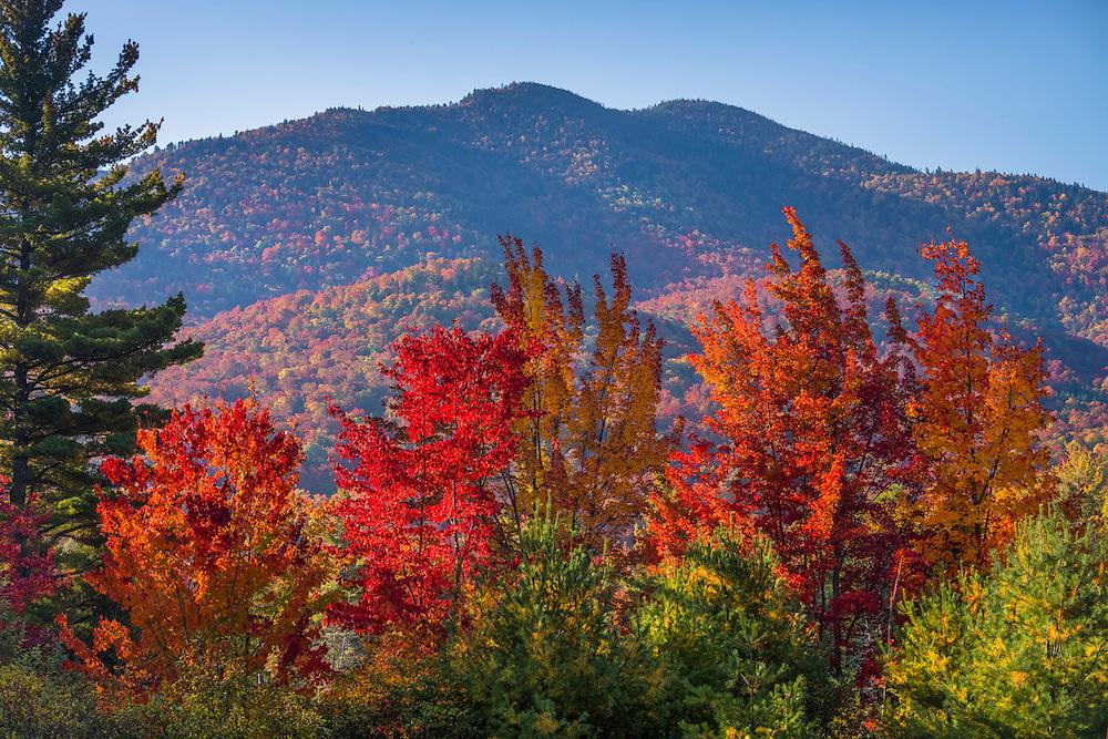 Morning light on fall treeline, with mountains in background, Blue Ridge Mtn, Adirondack Park, North Hudson, NY