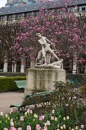 Magnolias behind a marble statue in the Jardin du Palais Royal. Paris, France, Europe