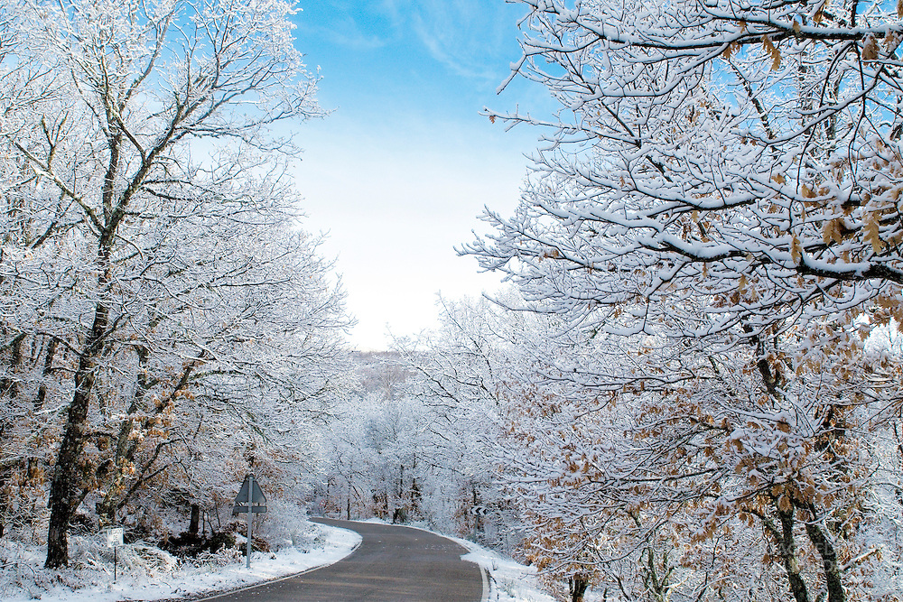 Snow covered branches at a road nearby Sanabria lake