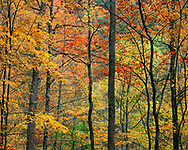 Colorful Fall Foliage In The Great Smoky Mountains National Park, Tennessee, USA