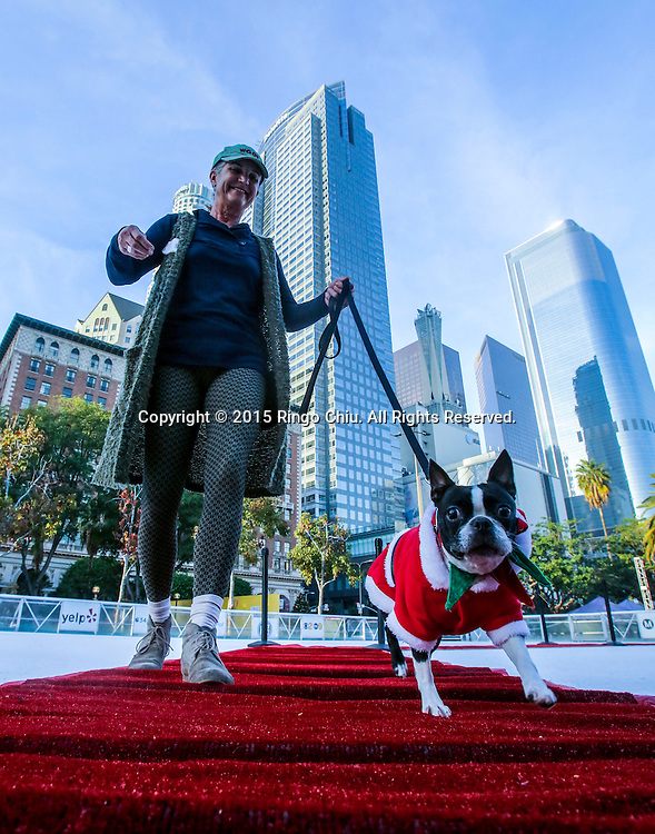 A dog owner walks with her pet with costume in a red carpet strut across the ice rink during a holiday costume contest in Los Angeles, he United States, on Wednesday, December 9, 2015.