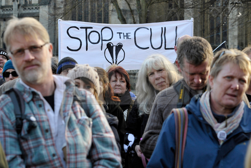 © Licensed to London News Pictures. 30/11/2013; Bristol, UK.  Campaigners against the badger cull hold a rally on Bristol's College Green, on the day that DEFRA halts the extension of the cull in Gloucestershire due to the cull missing the target for the number of badgers killed.  30 November 2013.<br /> Photo credit : Simon Chapman/LNP