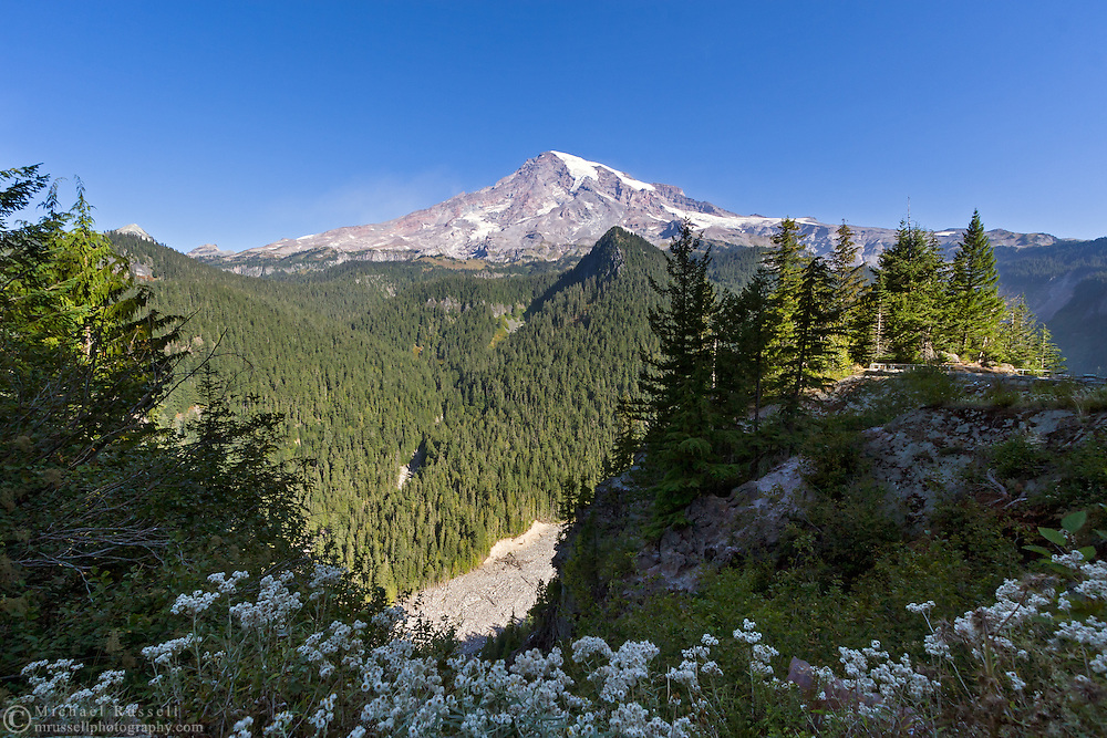 View of Mount Rainier from Ricksecker Point including Rainier, the Nisqually River, Cushman Crest and common roadside wildflowers - Pearly Everlasting.  Ricksecker Point is between the Longmire and Paradise areas in Mount Rainier National Park, Washington State, USA
