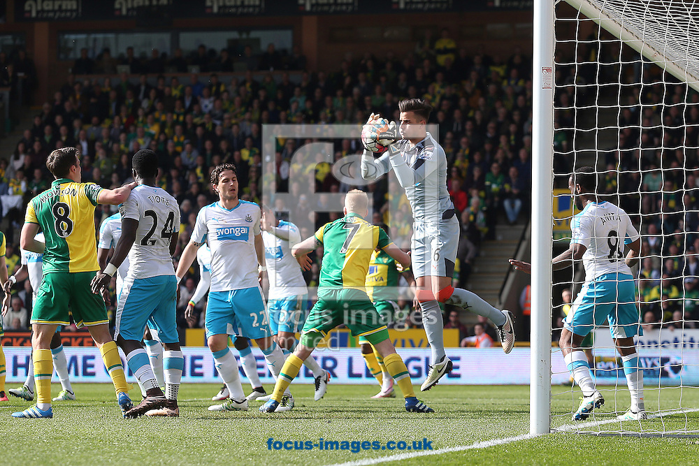 Karl Darlow of Newcastle United collects the ball safely during the Barclays Premier League match at Carrow Road, Norwich<br /> Picture by Paul Chesterton/Focus Images Ltd +44 7904 640267<br /> 02/04/2016
