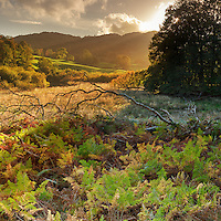 Brathay meadow, Skelwith, Lake District, Cumbria