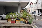 urban gardening Japan Yokosuka