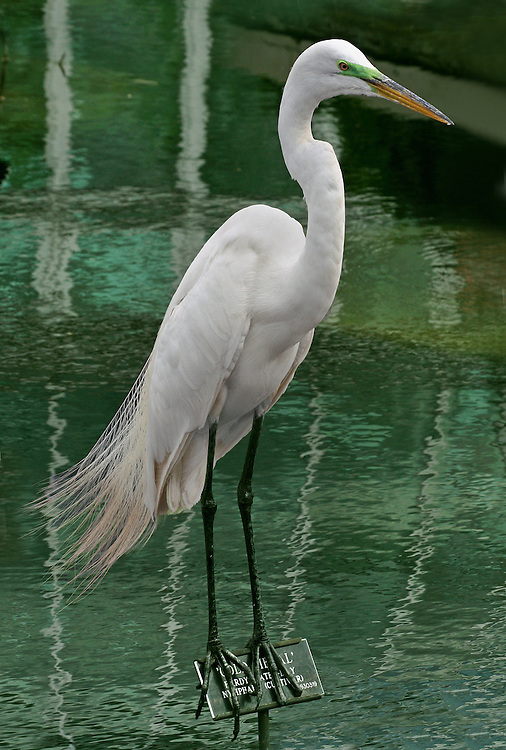 An egret standing on a sign at the Lily Pond.