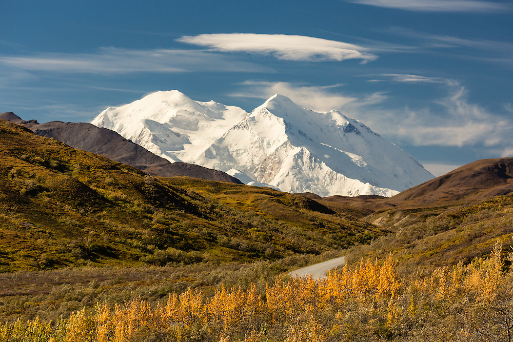 Denali (formerly Mt. McKinley) looms large over the last of the fall colors in Denali National Park in Interior Alaska. Autumn. Morning.