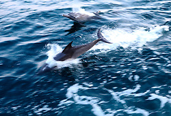 ATLANTIC OCEAN 19NOV14 - Dolphins in the Atlantic Ocean off the coast of Guinea-Conakry. <br /> <br /> jre/Photo by Jiri Rezac / Greenpeace<br /> <br /> © Jiri Rezac 2014