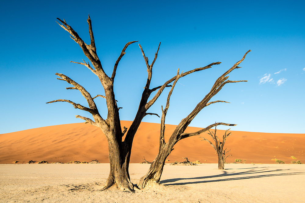 Dead acacia tree with the sunset in the Namib-Naukluft National Park in Namibia, Africa.Etosha, Namibia