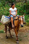 Nicaragua / Isla de Ometepe / Transportation / Steer