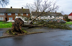 © Licensed to London News Pictures. 09/02/2020. Watford, UK. A tree fallen on to a car in Watford, Hertfordshire as Storm Ciara batters the UK. Airlines have cancelled dozens of domestic and international flights as Storm Ciara brings strong winds and rain. Photo credit: LNP