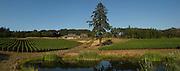 Alexana vineyard, Dundee Hills, Willamette Valley, Oregon