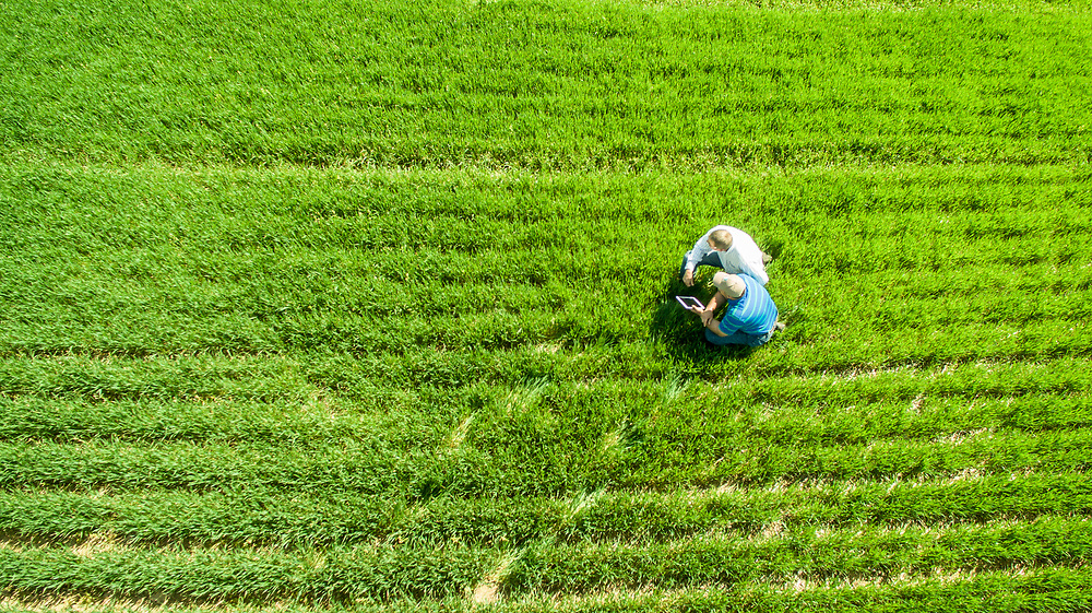 Aerial View of men in a field of cover crops