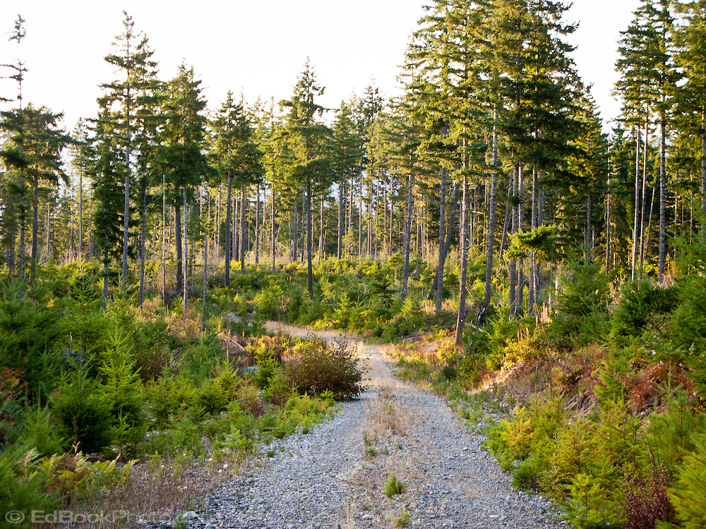 A logging road winds through clearcut edbookphoto