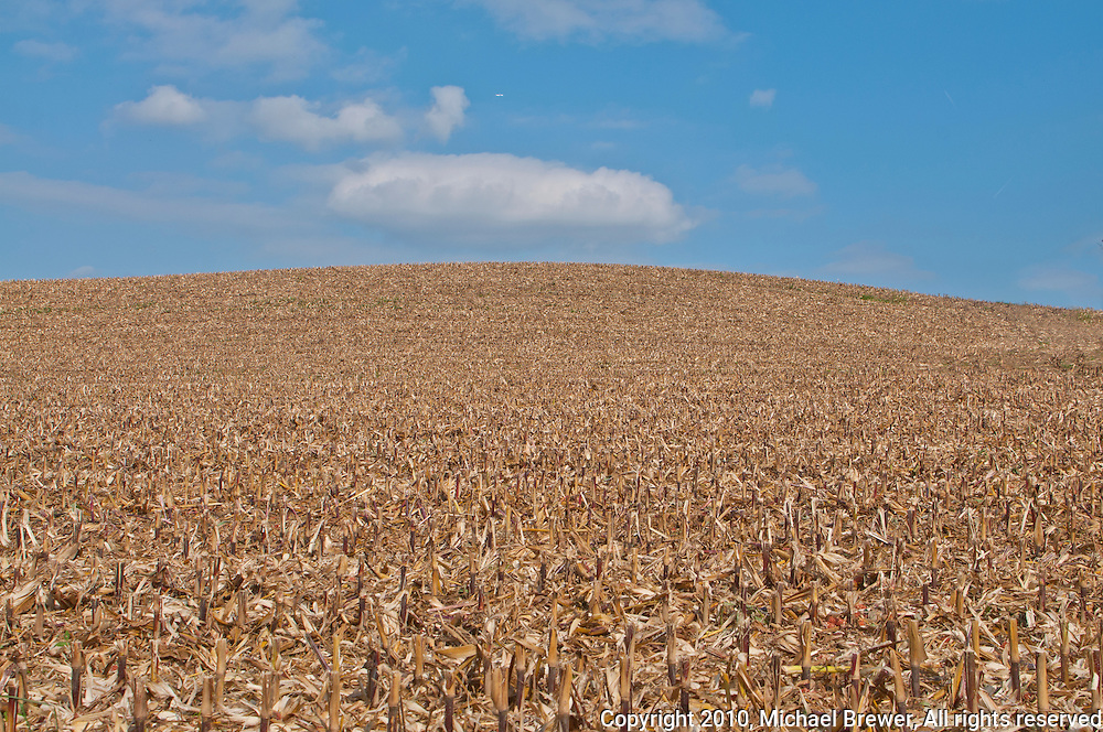 Expanse of corn stubble on a hillside against a blue sky in Zufikon, Switzerland.