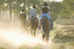 paard en mens, Equus ferus caballus