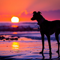 Dogs at Sunrise or Sunset