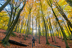 © Licensed to London News Pictures 07/11/2019, Cheltenham, UK. A walker enjoys the bright sunlight highlighting the autumn colours in the leaves of trees on Leckhampton hill, Cheltenham. Photo Credit : Stephen Shepherd/LNP