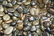 Rounded river pebbles are used in swales and stormwater planters to protect filter media from erosive flow velocities.