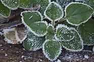 Tuinkruiden - Marjolein - Oregano | Herbs - Marjoram