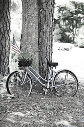 Old bike against a tree in downtown Summerville, SC