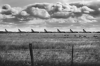 Grounded Qantas aircraft are seen parked at Avalon Airport in Melbourne, Wednesday April 8, 2020. Government-mandated travel restrictions have grounded a significant proportion of Australia's airline fleet because of the Coronavirus (COVID-19) pandemic.