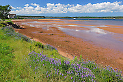 Iron rich red soil along the Northumberland Strait<br /> Lower Montague<br /> Prince Edward Island<br /> Canada