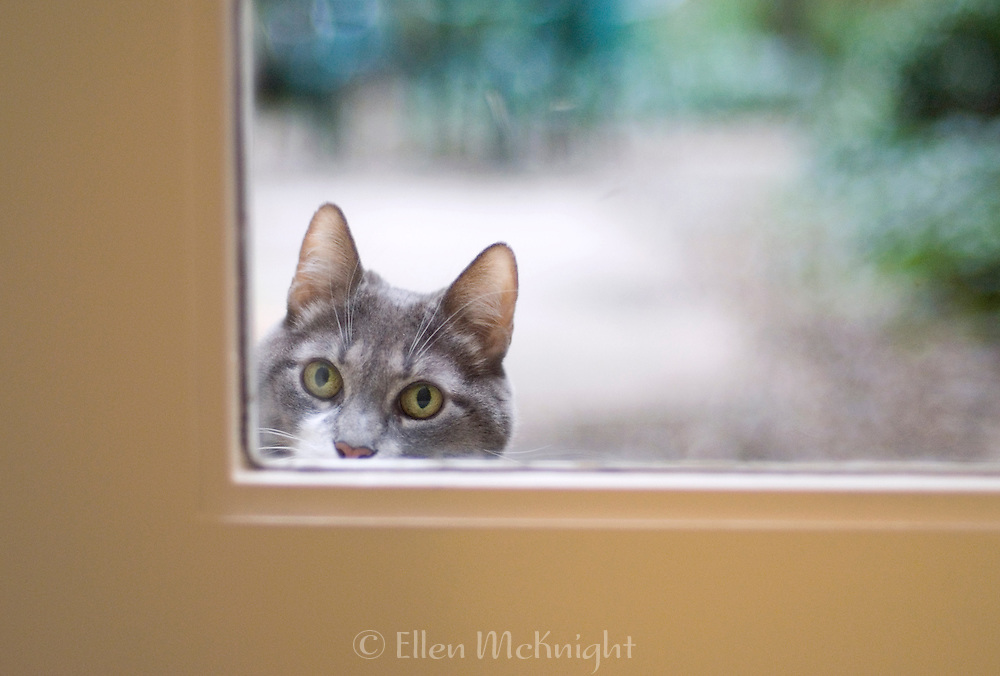 Cat Waiting Outside at Door