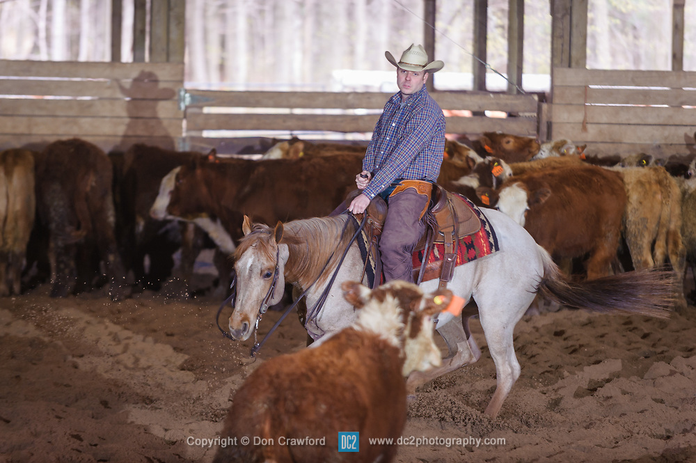 April 29 2017 - Minshall Farm Cutting 1, held at Minshall Farms, Hillsburgh Ontario. The event was put on by the Ontario Cutting Horse Association. Riding in the 35,000 Non-Pro Class is Tyler Hamilt Scott on Sweet and Lo owned by the rider.