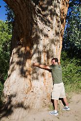 man hugging a very large tree