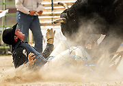 NEWS&amp;GUIDE PHOTO / PRICE CHAMBERS<br /> Bullrider Cody Moucha of Cody is attacked by the bull he was just bucked off at the Jackson High School Rodeo on Sunday at Teton County Fairgrounds.