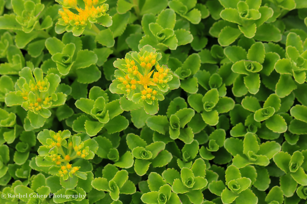 &quot;Yellow on Green&quot;<br />