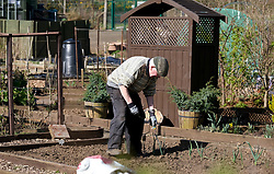 Livingston gardeners tend their allotments, 07 April 2020<br /> <br /> Some gardeners are keeping their allotments in shape during the coronavirus lockdown. West Lothian Council have said they can use it as part of their daily exercise as long as they keep to social distancing rules.<br /> <br /> The West Lothian Council website has the following advice:<br /> <br /> Allotments<br /> <br /> If you visit your allotment as your daily exercise, you must adhere to the rules on social distancing and hygiene. Handwashing is especially important before and after touching shared surfaces such as gates and taps. Shared indoor spaces on allotment sites should not be used, to minimise the risk of virus transmission.<br /> <br /> The Scottish Government has published the following statement on allotment sites during the COVID-19 outbreak:<br /> <br /> Decisions on whether or not to keep allotment sites open during the COVID-19 outbreak are currently a matter for local authorities and other allotment owners. Those wishing to access allotments should note that the Scottish Government has instructed people to stay at home. The Health Protection (Coronavirus) (Restrictions) (Scotland) Regulations 2020 prohibit any person from leaving the place they are living without a reasonable excuse, and ban public gatherings of more than two people. People over the age of 70 are advised to self-isolate.<br /> <br /> Pictured: The Livingston allotment is locked up but gardeners have keys. An elderly gentleman tends his plot.<br /> <br /> Alex Todd | Edinburgh Elite media
