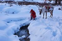 Mongolie, province de Khovsgol, les Tsaatans, éleveurs des rennes, transhumance hivernale, jeune garçon se desaltérant avec de l'eau de rivière gelée // Mongolia, Khovsgol privince, the Tsaatan, reindeer herder, winter migration, the young boy quenching his thirst