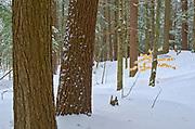Trees along the The North Branch of the Muskoka River at Wilson's Falls. Muskoka Country.<br />Bracebridge<br />Ontario<br />Canada