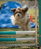 Guides Canins Samedi PM Standard Novice 3 et 4