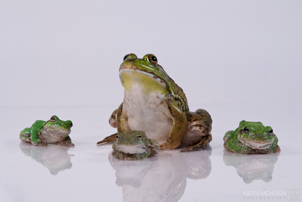 The 4 frog mafia fathers posing for a photo shoot
