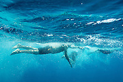 Open water swimmer at Bora Bora, a popular island in French Polynesia (the Tahitian Islands.)