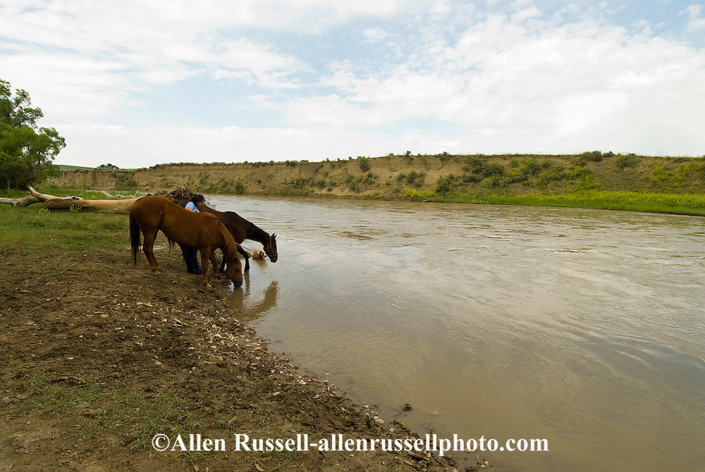 Little Bighorn River, Crow Indian Reservation, Medicine Tail Coulee where Battle of the Little Bighorn occurred, Montana, Crow girl waters horses.